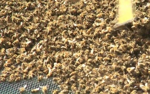 Массовое отравление пчел химикатами: пасечники обратились к Кабмину фото, иллюстрация