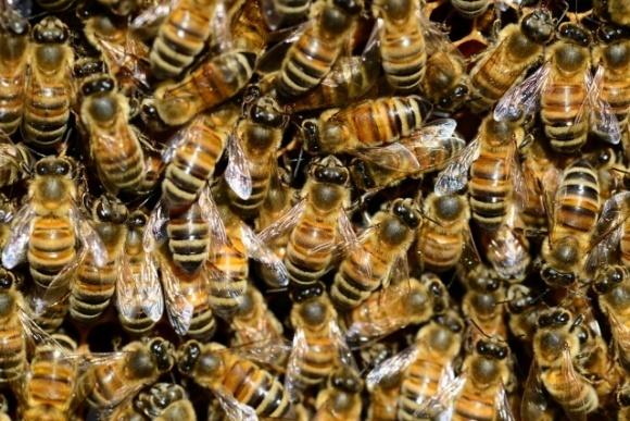 Пасечники в отчаянии обратились к президенту и председателю СБУ: «Такой массовой гибели пчел не было за всю историю» фото, иллюстрация