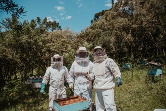 Алгоритм получения государственной поддержки пчеловодам в 2020 году фото, иллюстрация