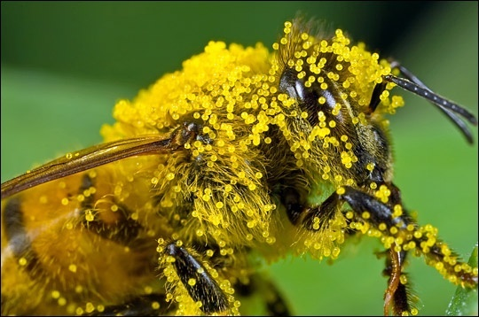 Швейцарские ученые подсчитали стоимость работы пчел по опылению сельхозкультур фото, иллюстрация