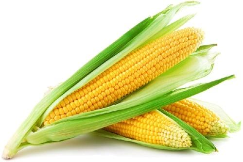 Найвища пропозиція української кукурудзи знижує ціни на Чиказькій біржі фото, ілюстрація