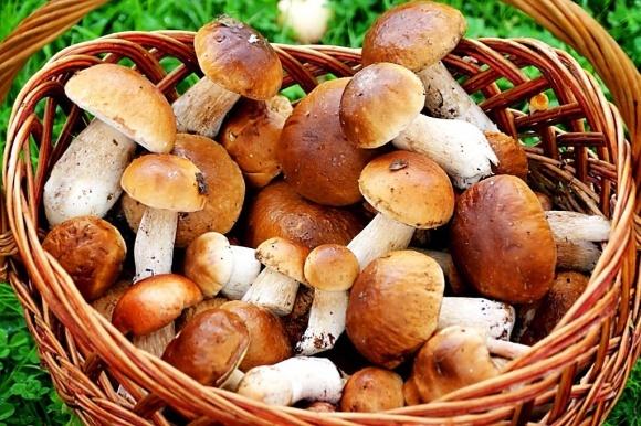 Вкусные и полезные правила потребления грибов фото, иллюстрация