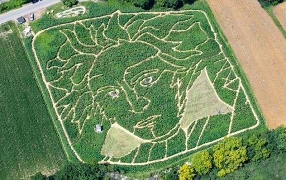У Німеччині з'явився гігантський портрет Бетховена серед соняшників та кукурудзи фото, ілюстрація
