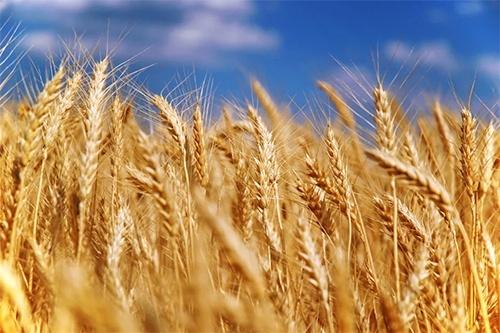 Украина увеличила экспорт зерновых нового урожая на 21.5%, – Минагрополитики фото, иллюстрация