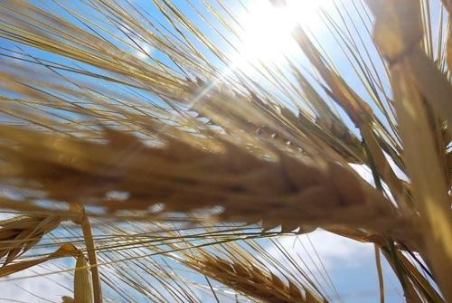 В Черниговской области яровой сев выполнен почти на 1 млн га фото, иллюстрация