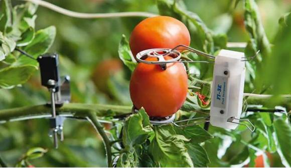 Точное земледелие позволяет значительно сэкономить   фото, иллюстрация