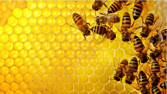 У геномі асоціальних бджіл знайшли схожість з геномом аутистів фото, ілюстрація