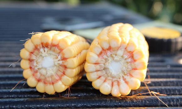 Агролайфхак: чому в кукурудзі мало зернят фото, ілюстрація