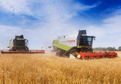 Канада зібрала більше зернових і менше ріпаку й бобових фото, ілюстрація