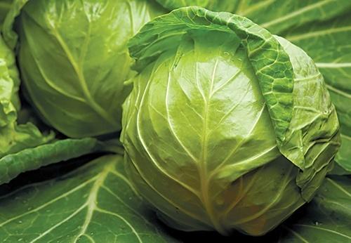 Як змінилися ціни на популярні види капусти в Україні за останній рік фото, ілюстрація