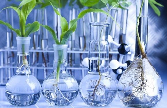 Биотехнологии обеспечивают кукурузе ежегодный прирост урожайности до 2,5% фото, иллюстрация