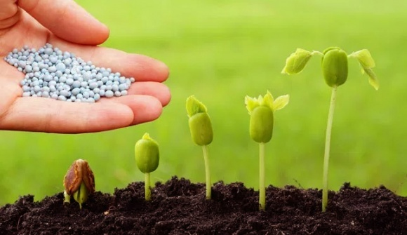 """Регулирование пестицидов: принцип """"предосторожности"""" или научные доводы? фото, иллюстрация"""