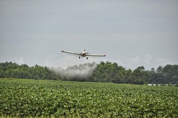 Исследователи из Германии разработали натуральный пестицид, который не вредит полезным насекомым, в том числе и пчелам фото, иллюстрация