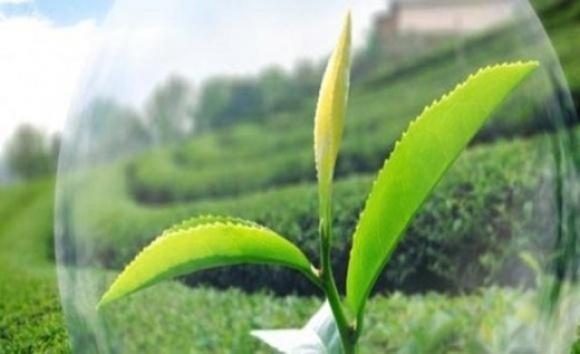 Світовий ринок біопрепаратів для захисту сільгоспкультур зростає швидше за «хімічний» фото, ілюстрація