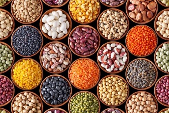 Україні не вистачає якісного насіння бобових фото, ілюстрація