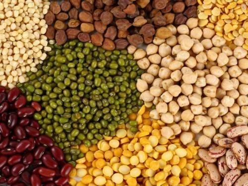 Мировая доля Украины в производстве зернобобовых лишь 1% фото, иллюстрация
