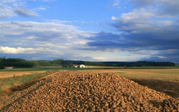 У Болгарії не дозбирали картоплю — вона виявилася задорогою в ЄС фото, ілюстрація