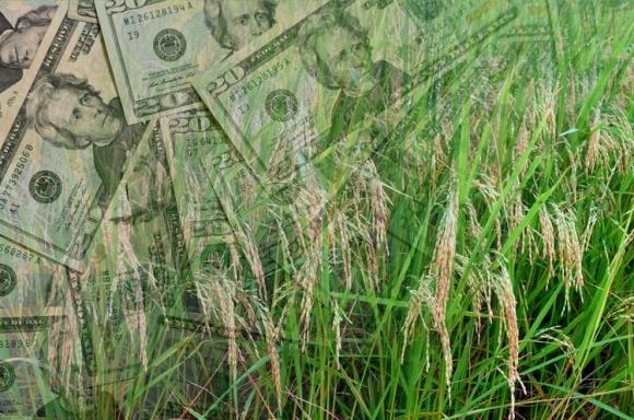 Рейтинг боргів українських агрохолдингів фото, ілюстрація