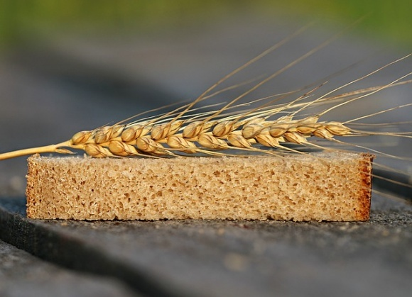 Ученые сообщили о создании ГМ-пшеницы без глютена фото, иллюстрация