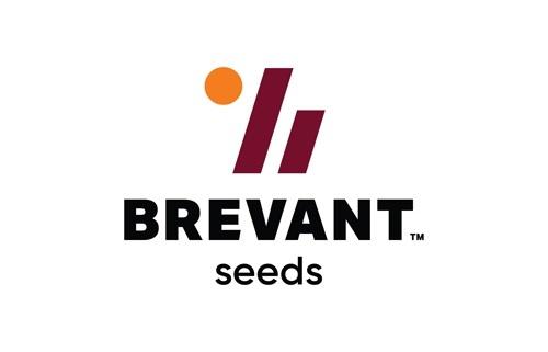 Портфель озимого ріпаку Pioneer® переходить до бренду Brevant™ фото, ілюстрація
