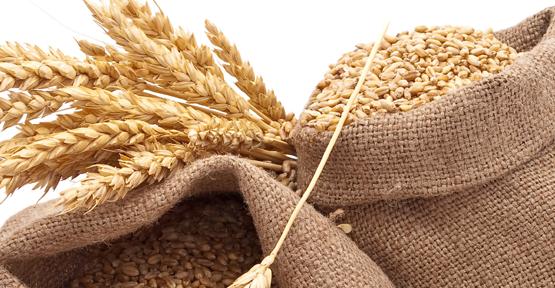 В хранилищах Кировоградской и Ривненской областей фуражное зерно заражено вредителями - Госпродпотребслужба фото, иллюстрация