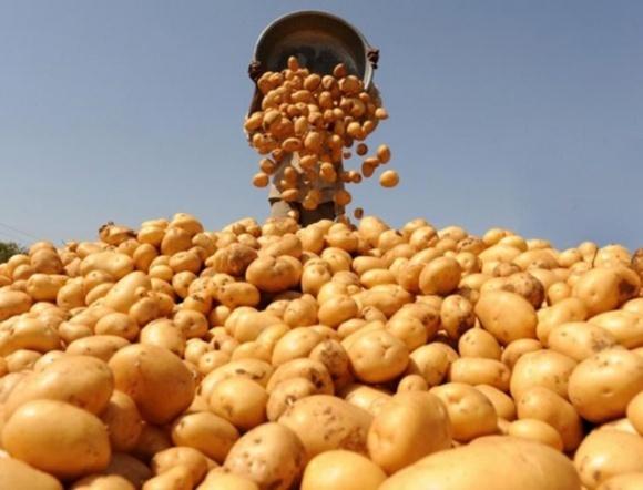 Каховский фермер в поисках голландских клубней фото, иллюстрация