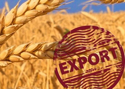 Экспорт украинского зерна в 2018/19 МГ достиг 48.3 млн тонн, – Минагрополитики фото, иллюстрация