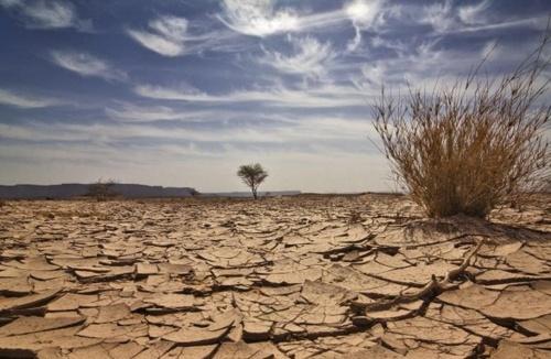 Посуха знищує посіви австралійської пшениці, виробництво впало до 11-річного мінімуму фото, ілюстрація
