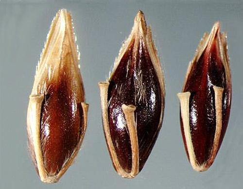 В Житомирской области задержали груз с зараженными семенами льна фото, иллюстрация