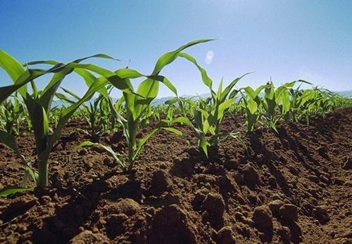 Аграрии Черкасской области засеяли яровыми зерновыми почти треть запланированных площадей фото, иллюстрация