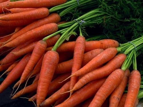 Предложение моркови на рынке Украины является недостаточным фото, иллюстрация