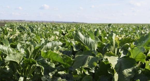 В Украине ученые фиксируют аномально ускоренное развитие поздних агрокультур фото, иллюстрация