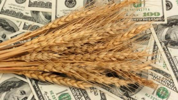 Україна ризикує втратити в новому сезоні близько $220 млн на пшениці та кукурудзі фото, ілюстрація