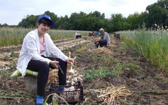 В Одесской области фермеры объединились для оптимизации продаж чеснока фото, иллюстрация