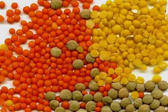 Индия предложила Винницкой области увеличить посевы чечевицы на экспорт фото, иллюстрация
