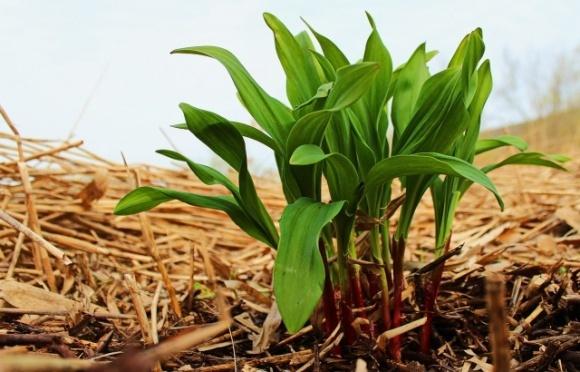 Прибуткова сільгоспкультура, яка може приносити до $500 тис. з гектара фото, ілюстрація
