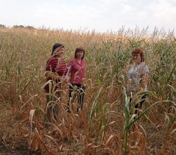 Из-за засухи в Черкасской области потерян урожай на площади около 3 тыс. га фото, иллюстрация