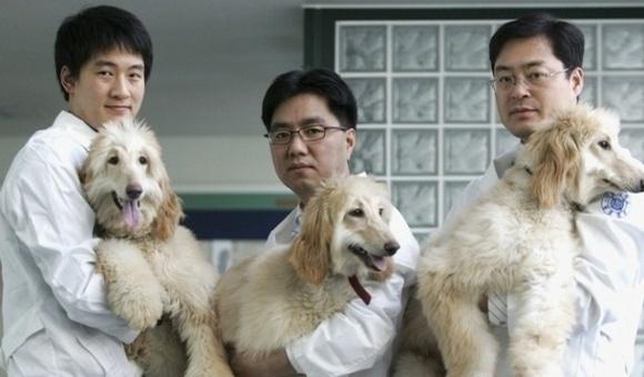 Китай створить величезну фабрику з клонування тварин фото, ілюстрація