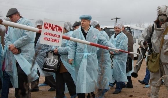 На Одещині - новий спалах АЧС, загинуло 35 свиней фото, ілюстрація