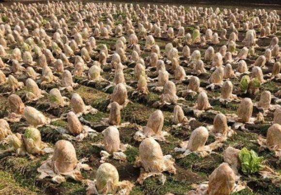 """Японский фермер обнаружил на своем поле """"яйца инопланетян"""" фото, иллюстрация"""