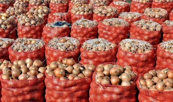 Экспорт украинского лука рекордно вырос за низкой цены фото, иллюстрация