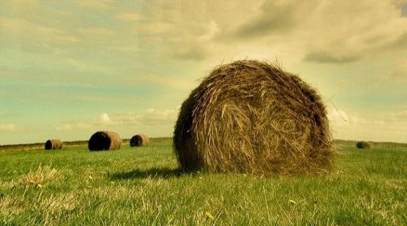 Про які види страхування не знають українські фермери фото, ілюстрація