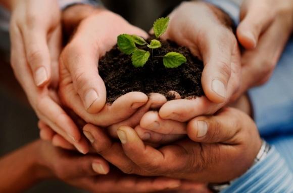 Гнідавський цукровий завод безкоштовно роздаватиме фермерам органічне добриво  фото, ілюстрація