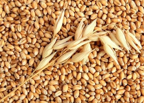 Мировое производство зерна в 2019 году может составить 2.685 млрд тон фото, иллюстрация
