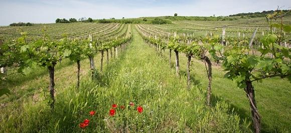 Прийнято низку нормативно-правових актів щодо розвитку галузі садівництва, виноградарства і хмелярства фото, ілюстрація