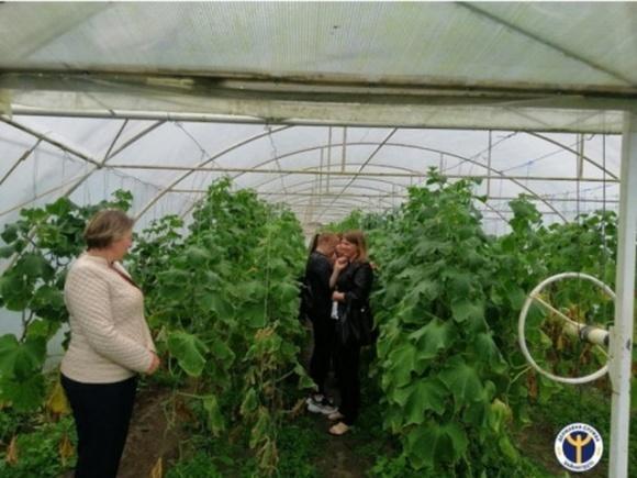 Седлище: супружеская пара успешно выращивает в теплицах овощи  фото, иллюстрация