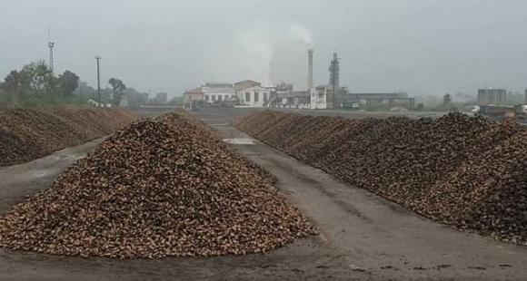 Защиты от рейдеров просит коллектив ООО «Ильинецкий сахарный завод» на Винничине фото, иллюстрация