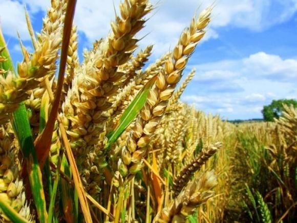Египет удерживает лидирующую позицию импортера украинских зерновых с 2011 года - ИАЭ фото, иллюстрация