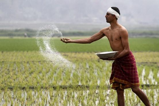 Нынешний муссон в Индии стал лучшим за 6 лет фото, иллюстрация