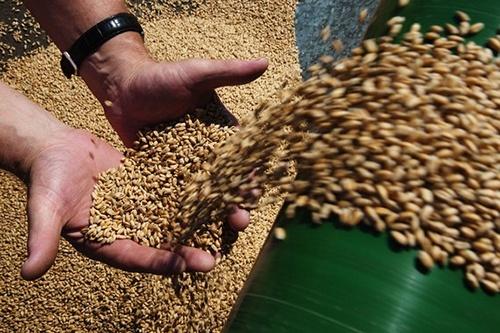 Українські порти збільшили тижневе відвантаження зерна в 1.5 рази фото, ілюстрація